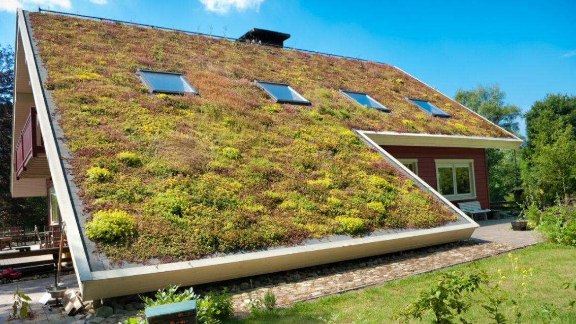 Groen dak (huis)