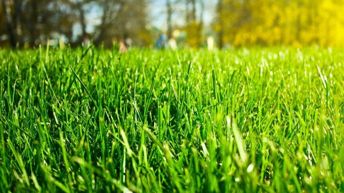 Kies voor gras