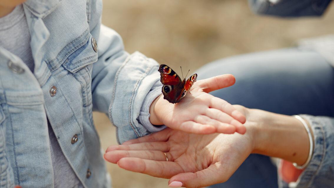 Red onze insecten, red onze natuur!
