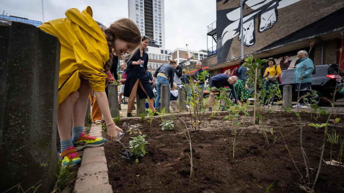Parfum de GroenGroen legt kleinste voedselbos van Rotterdam aan